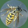 Bestrijding van insekten nodig? Neem contact op met Vermin Control Ongediertebestrijding!