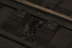 Ratten op treinrails