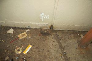 Het vinden van uitwerpselen is een aanwijzing om te starten met rattenbestrijding