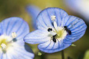 mieren houden van zoetigheid