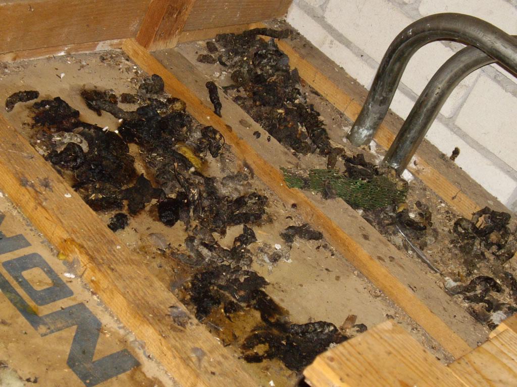 mieren verjagen in huis